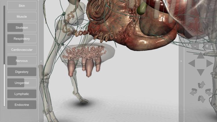 3D Bovine Anatomy screenshot-9