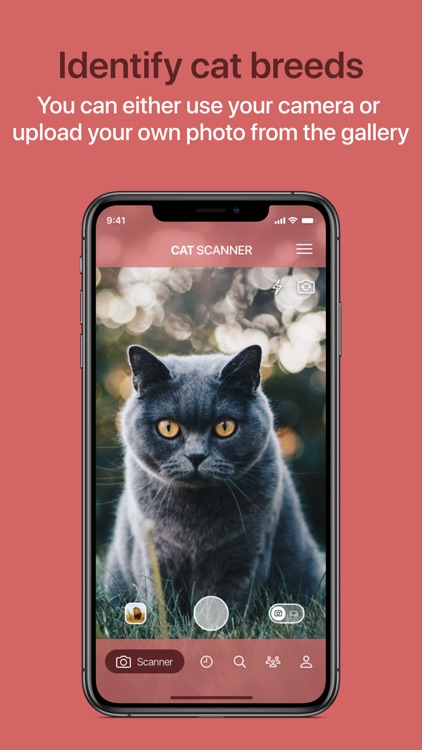 Cat Scanner screenshot-0