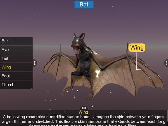Diversity in Living: Mammalia screenshot 13