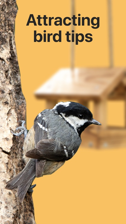 Picture Bird: Birds Identifier screenshot-4
