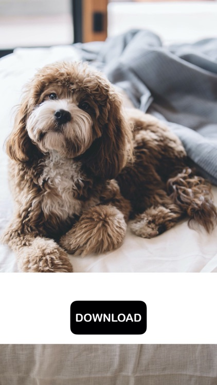 Dog & Puppy Wallpapers - woof!