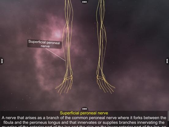 Human Nervous system screenshot 9