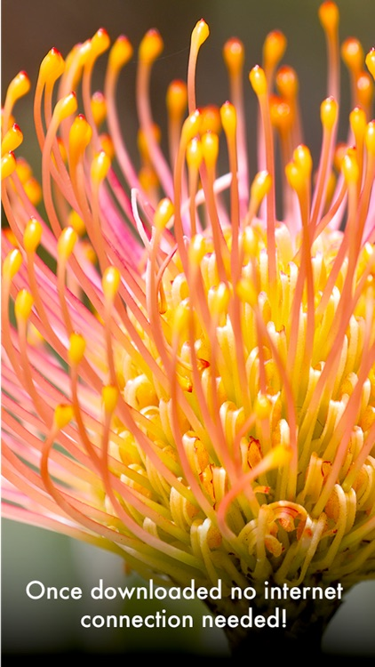 Wildflowers of South Africa screenshot-8