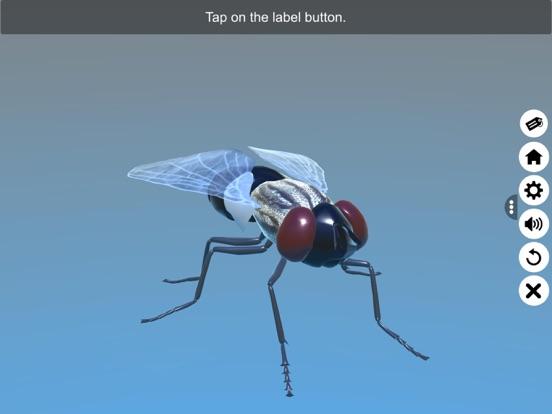 Diversity in Living:Arthropoda screenshot 13