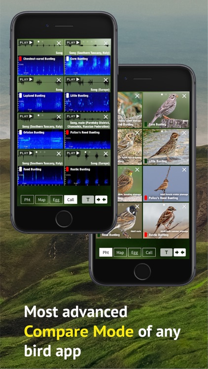 All Birds Scotland Photo Guide screenshot-6