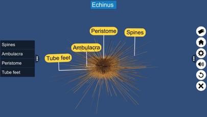 Echinodermata screenshot 9