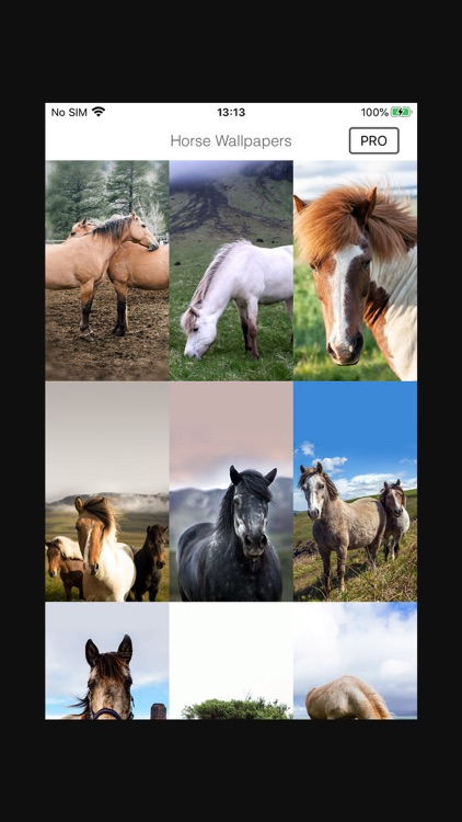 Horse Wallpapers & Background