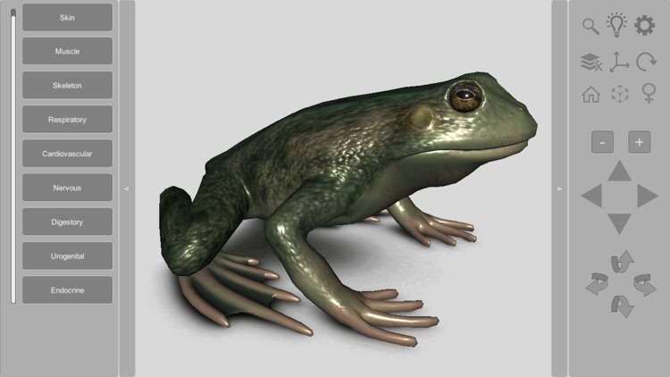 3D Frog Anatomy