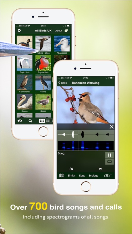 All Birds UK - the Photo Guide