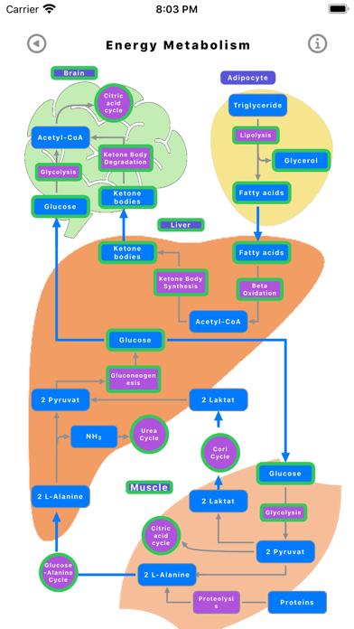 Скриншот №10 к Metabolic Organs