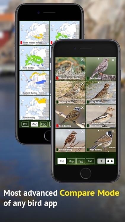 All Birds Sweden - Photo Guide screenshot-6