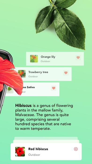 はなの名前 花の名前を調べる 植物の名前 花の名前 - 植物のおすすめ画像2