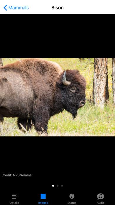 Yellowstone NP Field Guide Screenshots