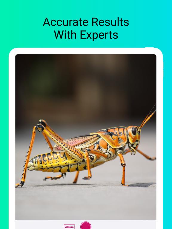 Insect Identifier - Scan Bugs screenshot 6
