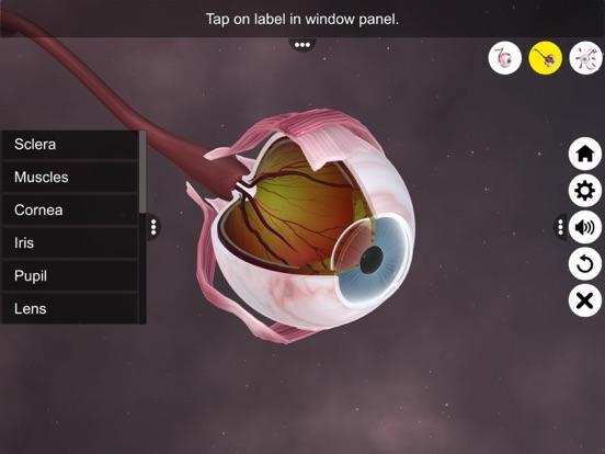 The Eye (Anatomy & Physiology) screenshot 13