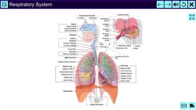 The Amazing Human System screenshot 4