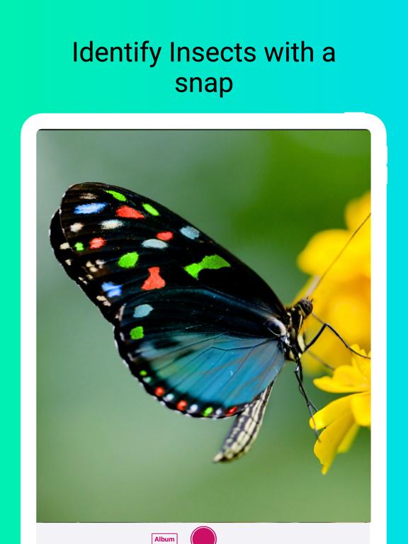 Insect Identifier - Scan Bugs screenshot 5