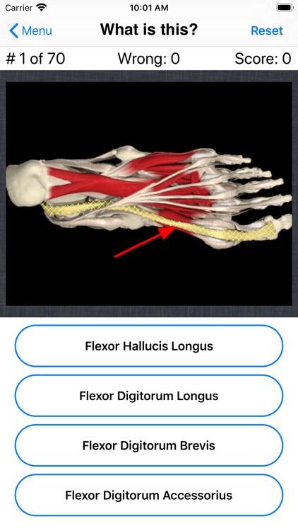 Anatomy Foot Quiz screenshot-3