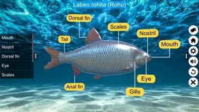 Diversity in Living: Pisces screenshot 3
