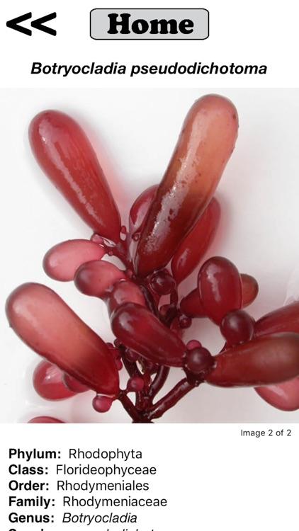 Seaweed Sorter screenshot-4