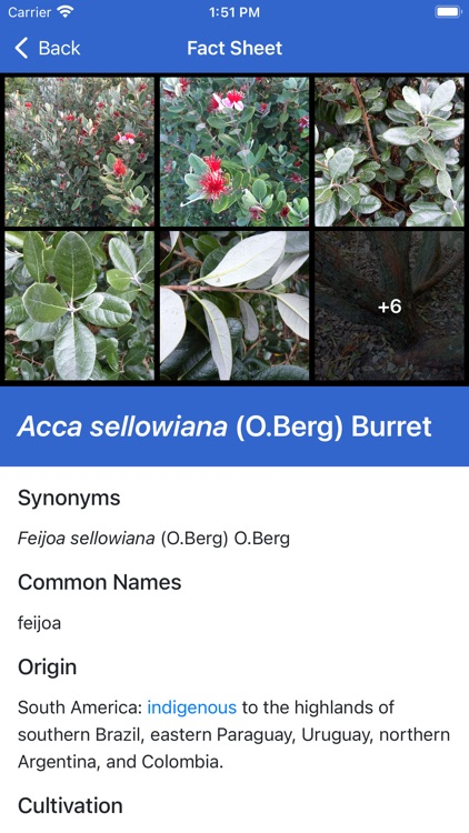NZ Myrtaceae Key screenshot-4
