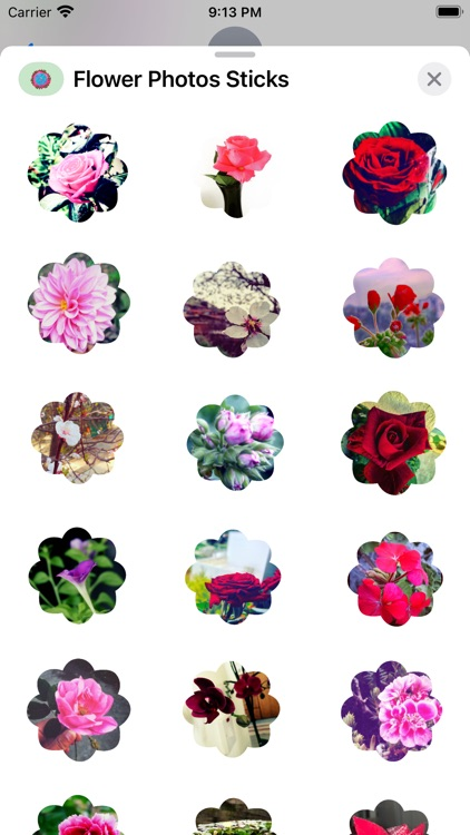 Flower Photo Sticks screenshot-6