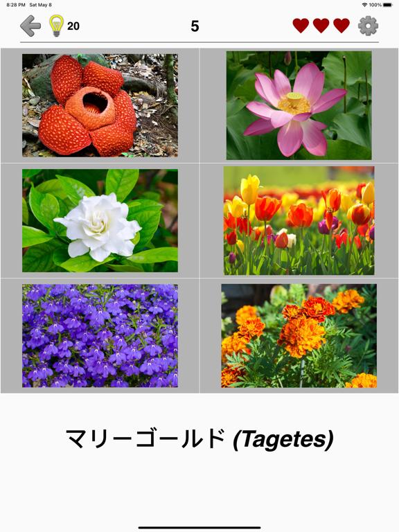 花 - 美しい植物についての植物のクイズのおすすめ画像2