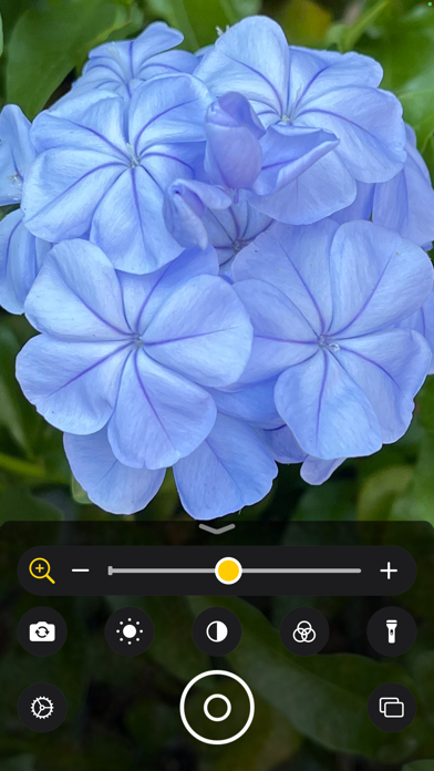 https://is5-ssl.mzstatic.com/image/thumb/PurpleSource125/v4/57/41/af/5741af5c-01fb-6d46-4f26-b9da280320fa/e82aeb62-7b50-448f-9ac4-2f007aedef65_magnifier-d21-blue-flower.png/392x696bb.png