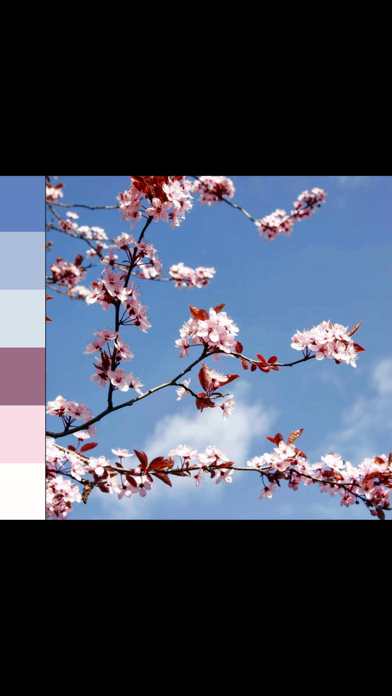 ColorPalette: Swatch Maker screenshot 9