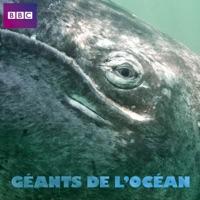 Télécharger Ocean Giants, Géants de l'océan Episode 3