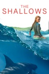 The Shallows wiki, synopsis