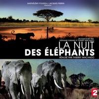Télécharger La nuit des éléphants Episode 1